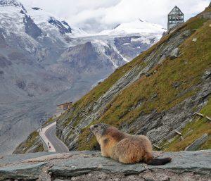 Marmot-and-Habitat_web