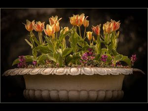 Spring-Bulbs_web